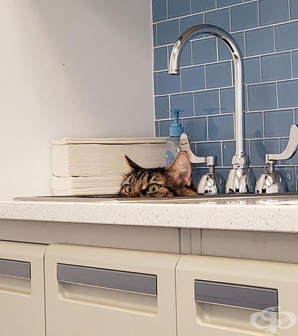 Мивката явно е едно от най-добрите скривалища.