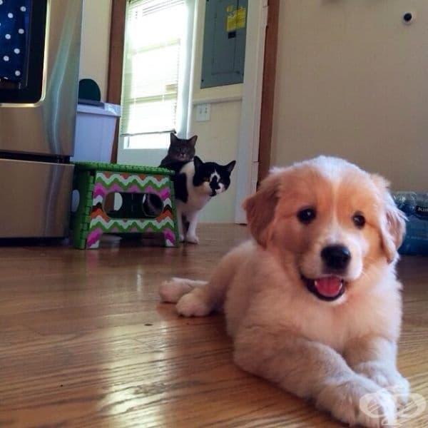 Нашите котки са объркани заради новия член на семейството.