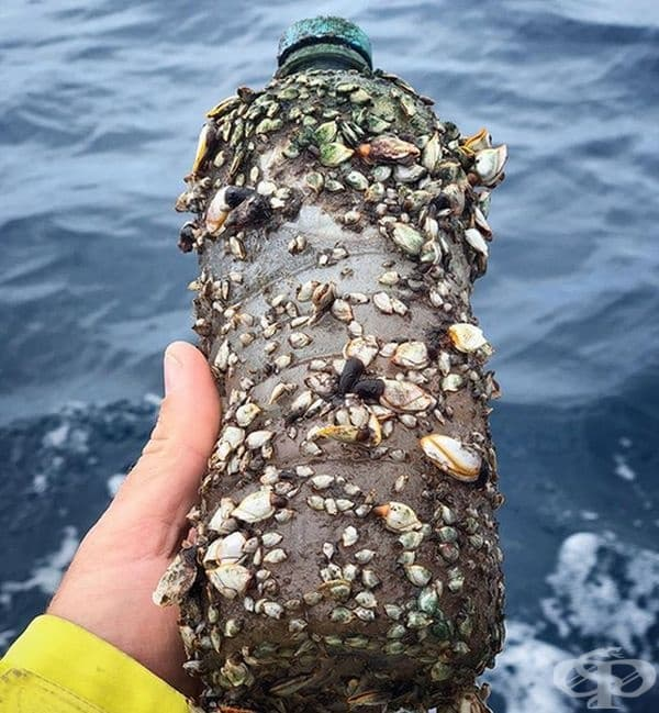 Миниатюрни мидички, обитаващи пластмасова бутилка