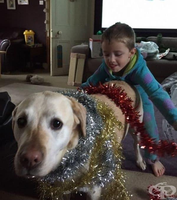 Въпреки че е едва първата седмица на декември, кучето е вече украсено.