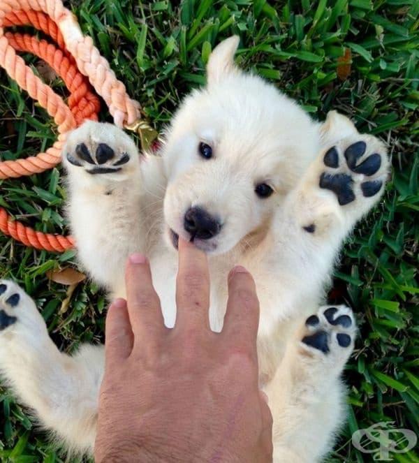 Малка полярна мечка или малко бяло кученце?