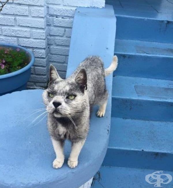 Котка, която прилича на вълк.