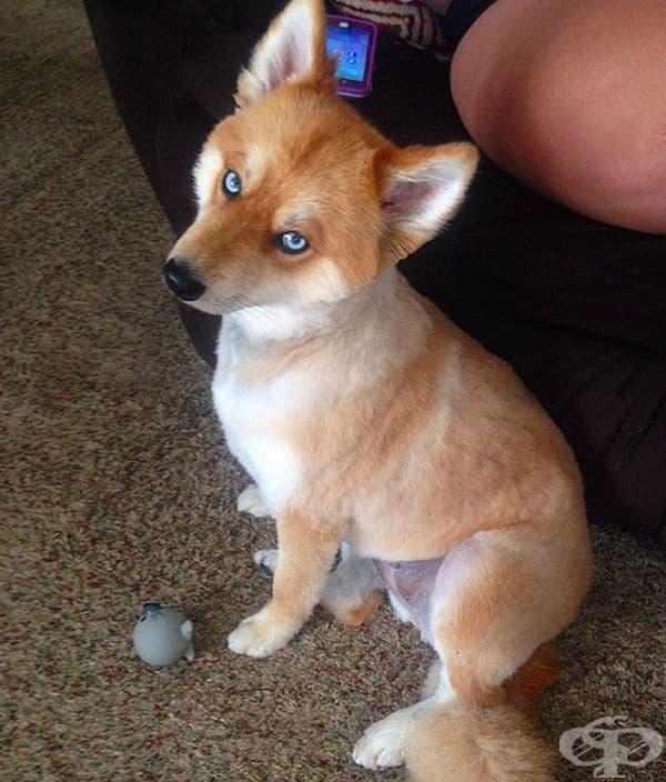 Лисица или куче? Куче.