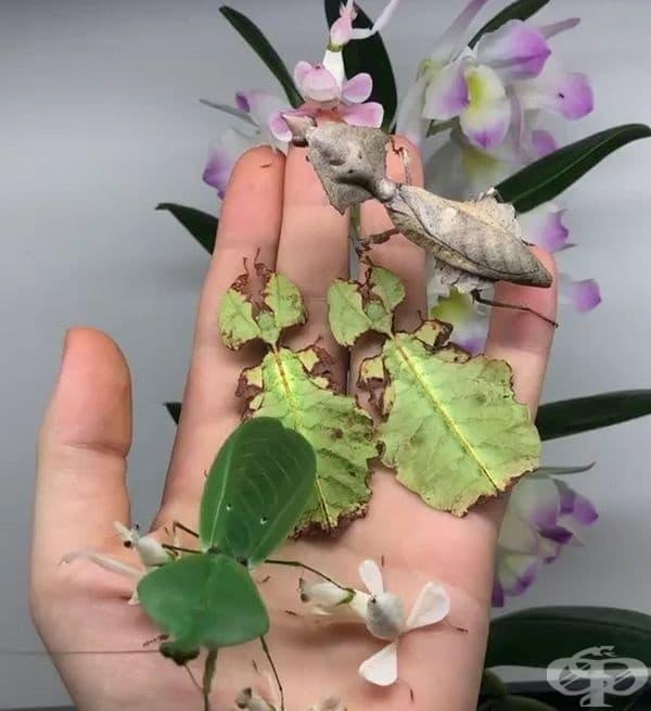 Задача: Открийте колко насекоми има на снимката и колко цвята от растението?