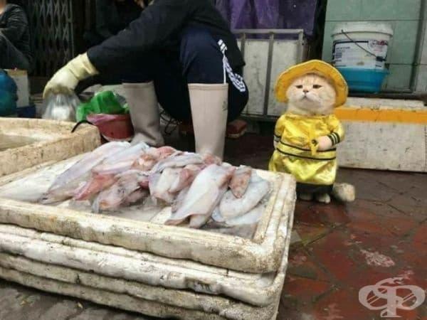 Най-сладкият продавач на риба на виетнамския пазар.