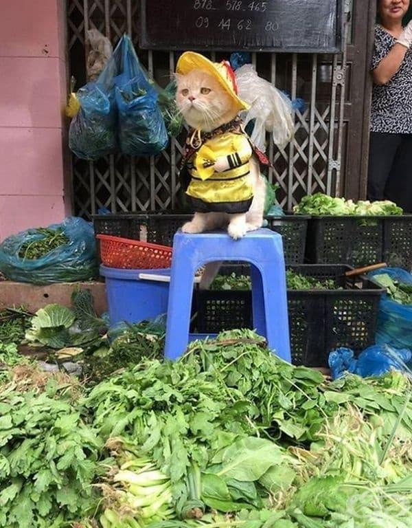 И зеленчуци.