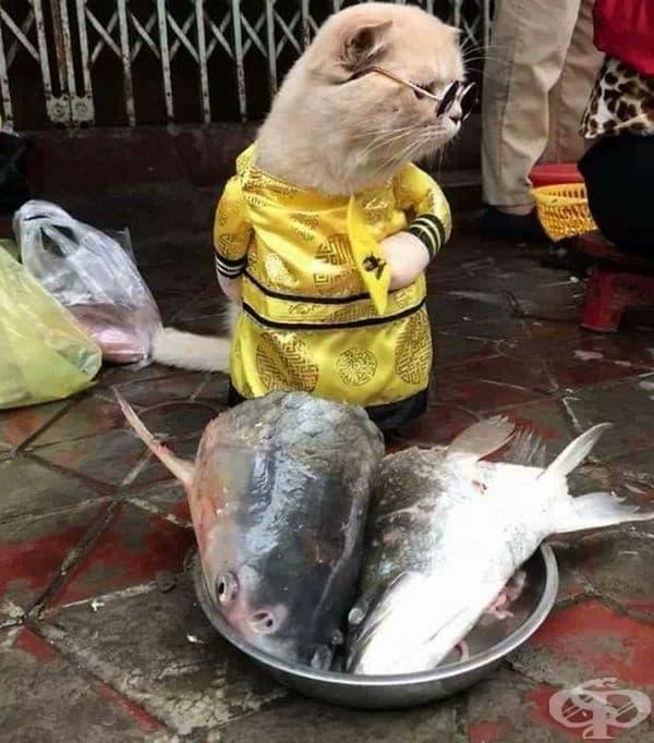 Останали са само две риби за продан.