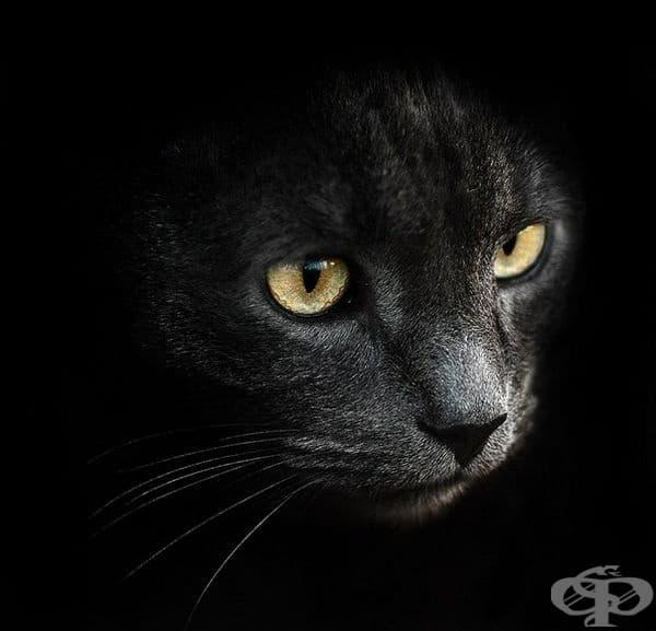 30 зашеметяващи портрета на животни от украинския фотограф Сергей Полюшко