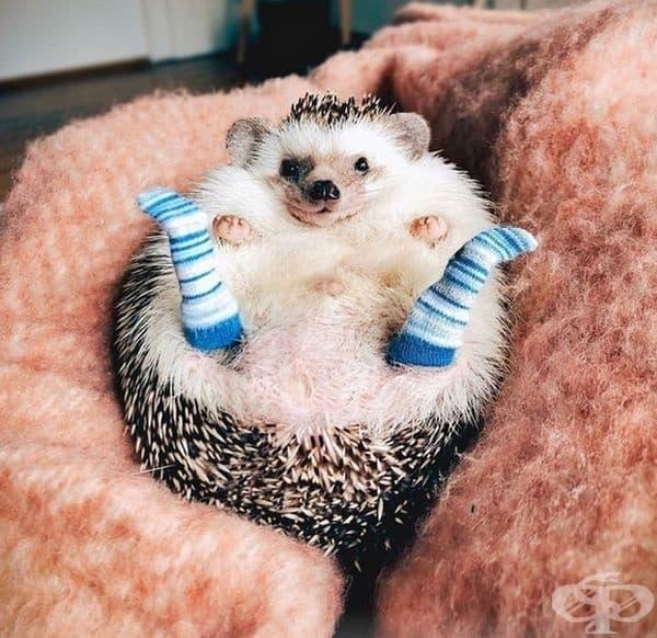 """""""Харесват ли ви новите ми чорапи?"""""""