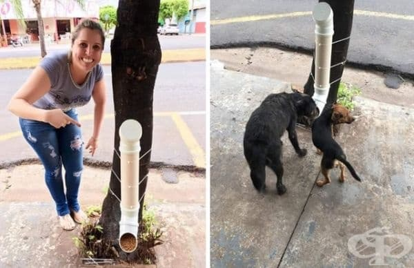 Решение за хранене на бездомни кучета.