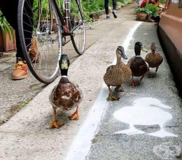 Алея за патици.