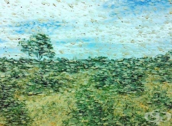 Мръсотията по прозореца превърна пейзажа зад него в картина на Моне.