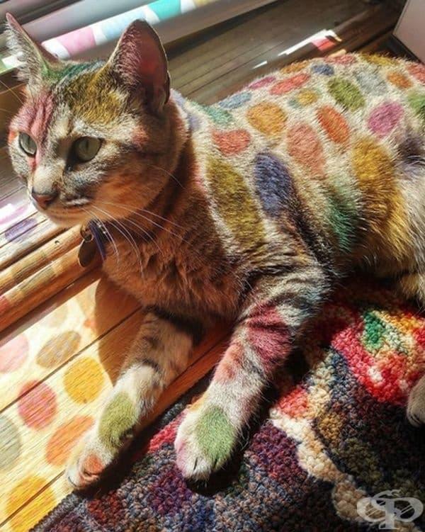 Цветно стъкло превърна котката в герой от анимационен филм.
