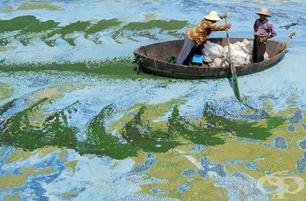 Водораслите в езерото наподобяват картина на импресионисти.
