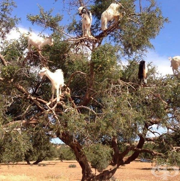 Кацнали на дърво.