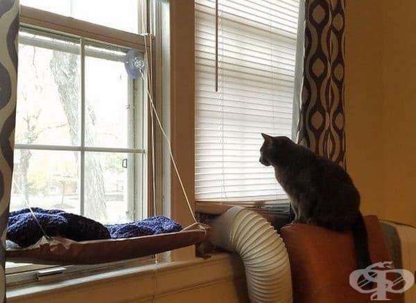 30 котки в неочаквано смешни ситуации