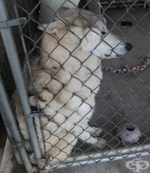 Това куче се доближава до оградата на приюта, за да бъде галено от посетители.