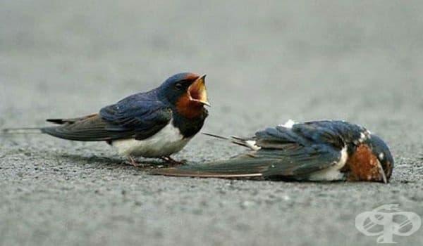 Тази птица плаче за изгубения си приятел. Животните също имат чувства.