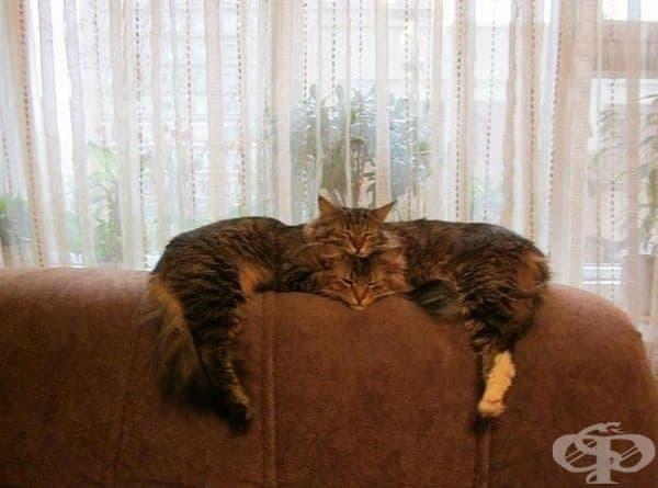 Ето как две котки се сливат в една.
