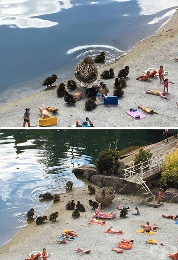 Гигантски патици на плажа?