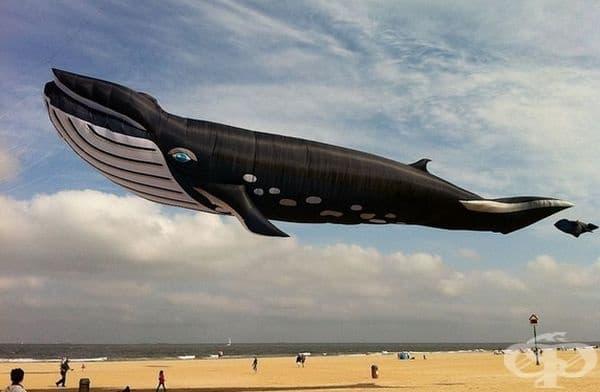 Това не е Фотошоп, а 27-метров балон във формата на кит.