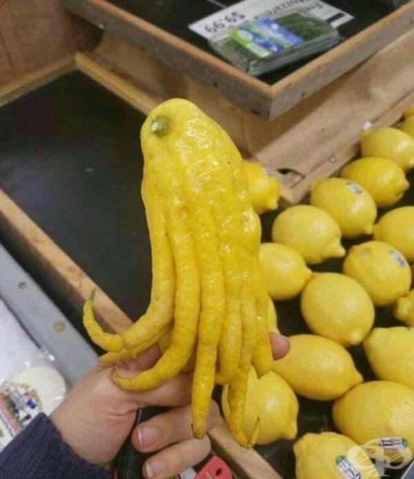 Лимон или царят на лимоните.