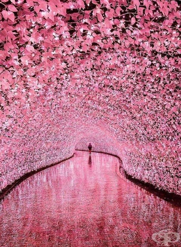 Приказен тунел в Мие, Япония.