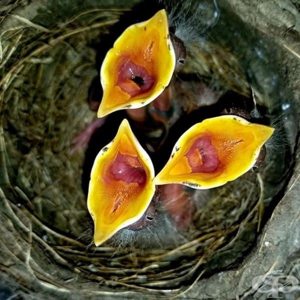 Тези екзотични цветя всъщност са малки гладни пиленца.