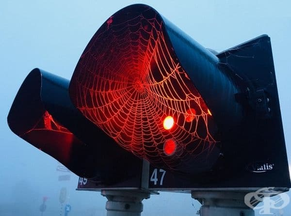 Сутрешна мъгла, светофар и паяжина.