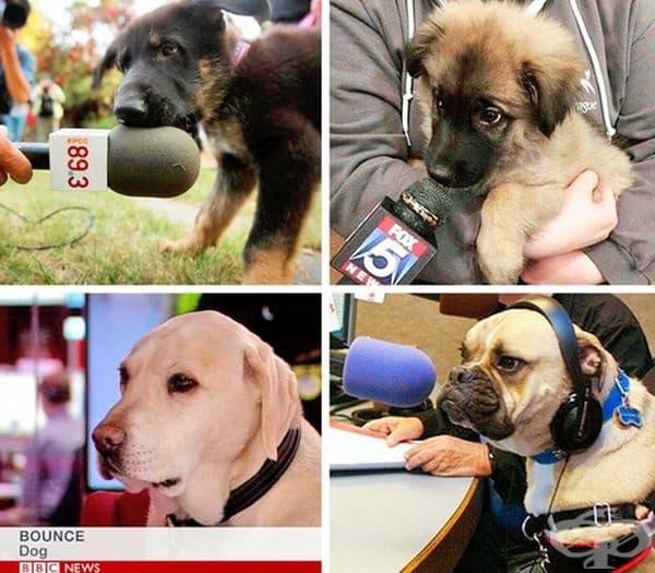 """""""Интервюирането на кучета се оказа забавна задача."""""""