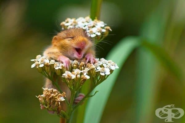 Най-усмихнатото животно!