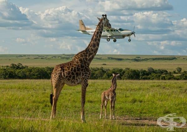 Явно самолетът е доста вкусен.