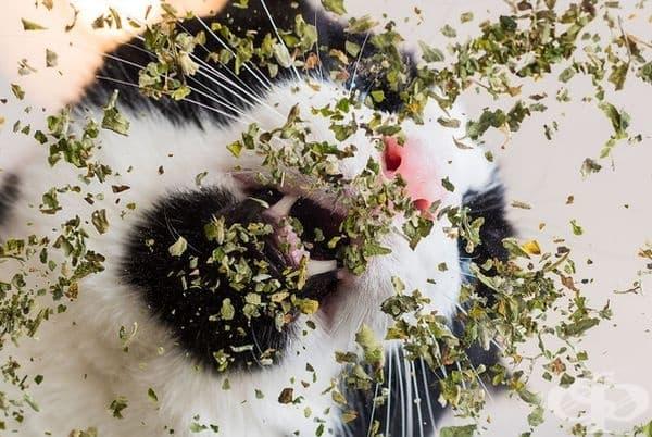 20 щури снимки на котки
