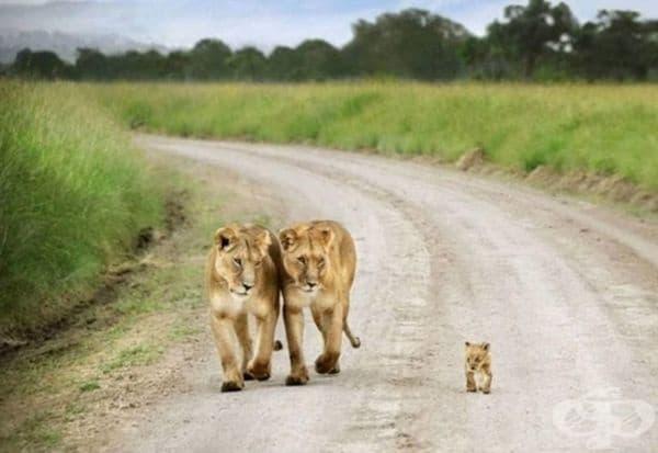 Просто семейна разходка.