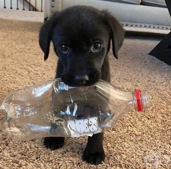 Без значение колко играчки има, пластмасовата бутилка винаги е любима.