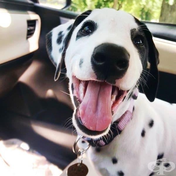 Щастливо куче, отива в парка.
