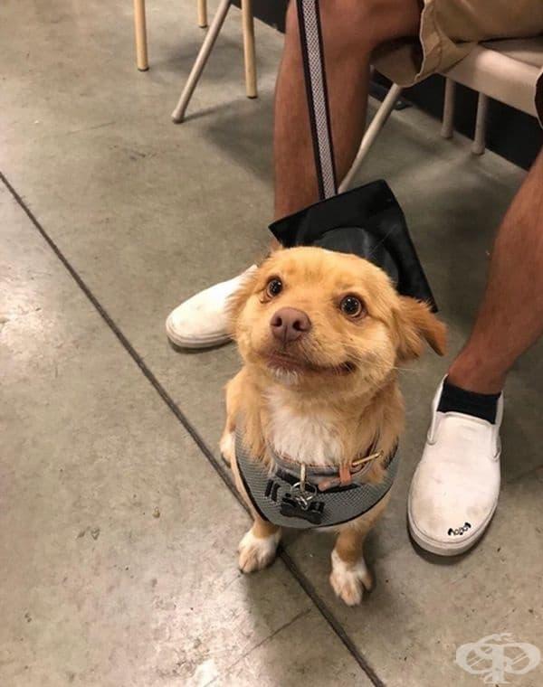Младежът вече е с диплома за послушание.