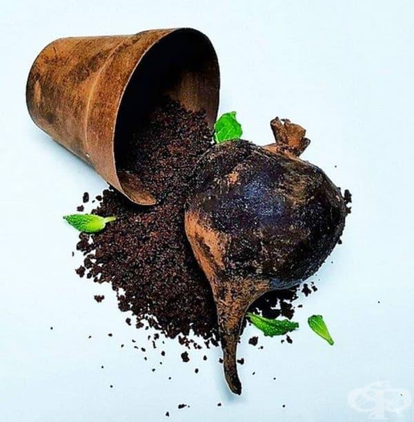 Цвекло. Пай от шоколад и червено цвекло с шоколад.
