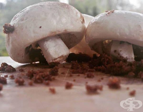 Гъби, направени от шоколадови бисквити и кокосово меренге.