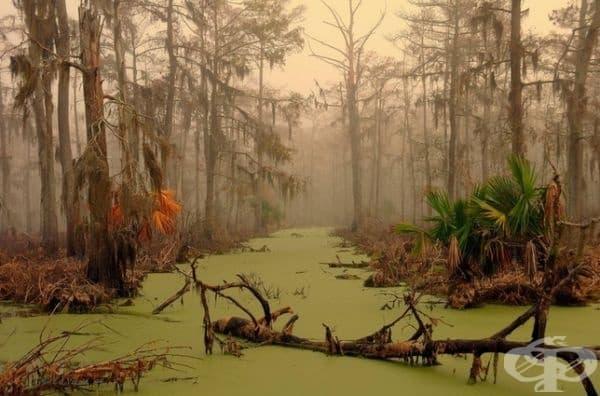 Гори в Луизиана.