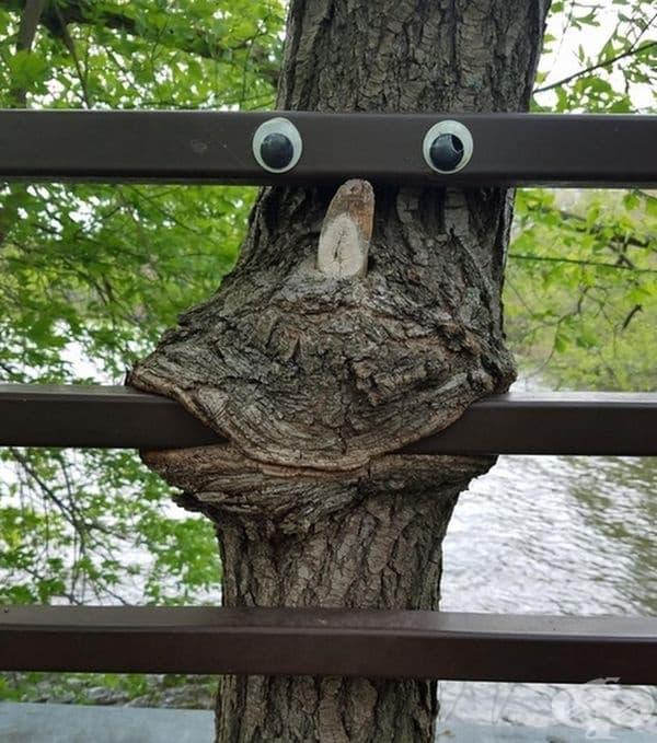 Това дърво обича да си похапва стомана.