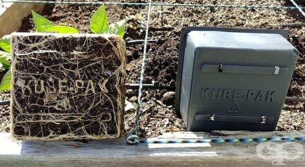 Корените на растенията се учат да пишат.