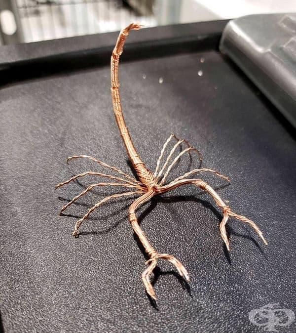 Меден скорпион.