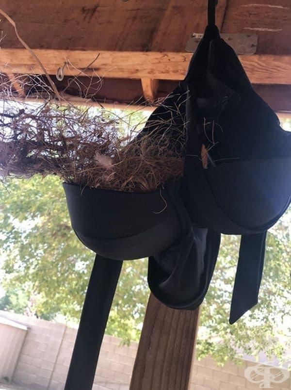 """""""Сестра ми си закачи банските да съхнат, а една птичка си направи гнездо в него""""."""