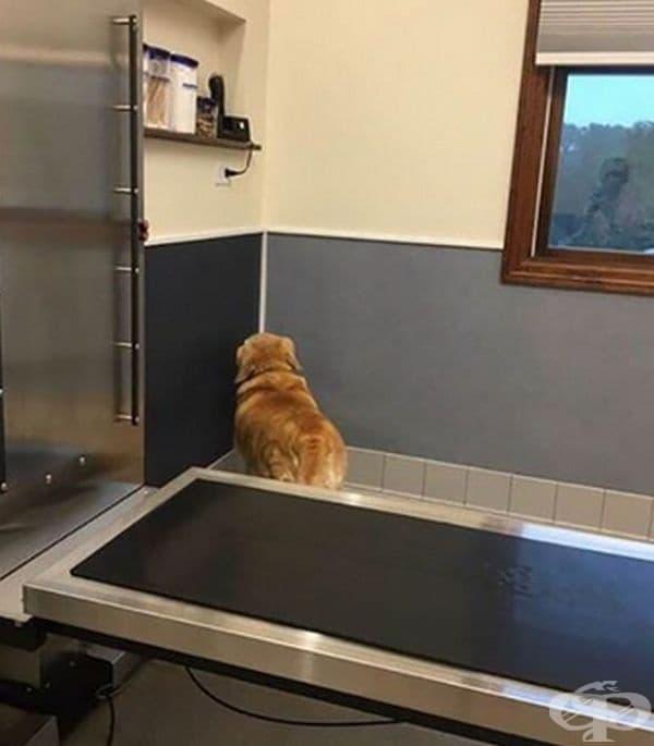 """Ако аз не виждам ветеринаря, то и той не ме вижда."""
