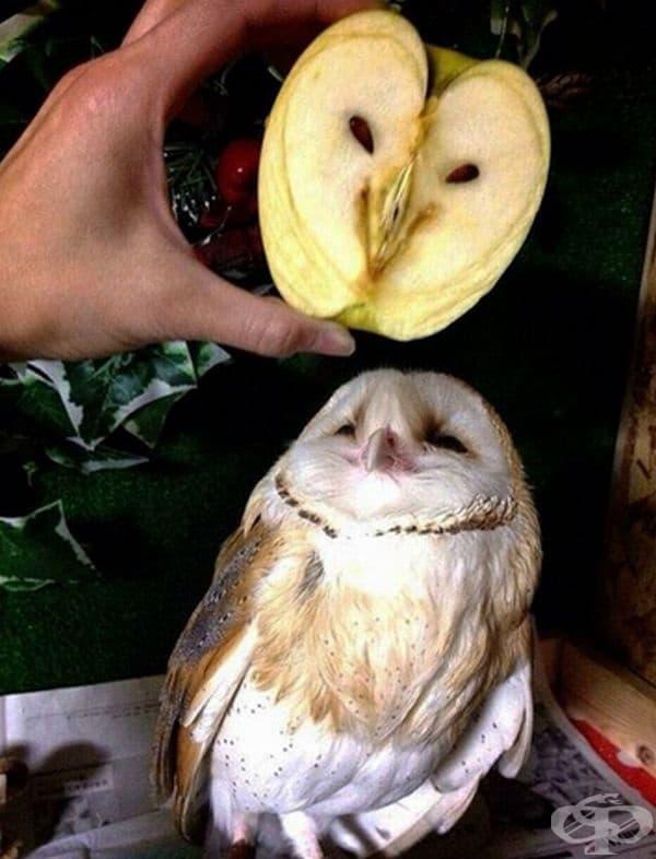 Ябълка и бухал.