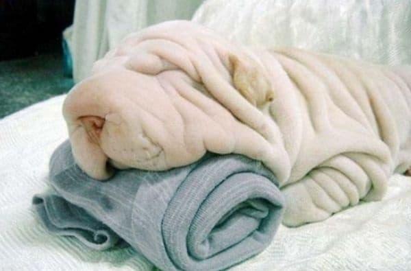 Куче и кърпа.