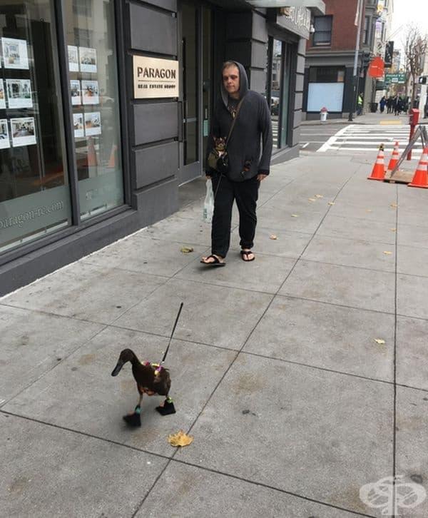 Просто мъжът разхожда патицата, докато двете кучета разглеждат от джобовете му.