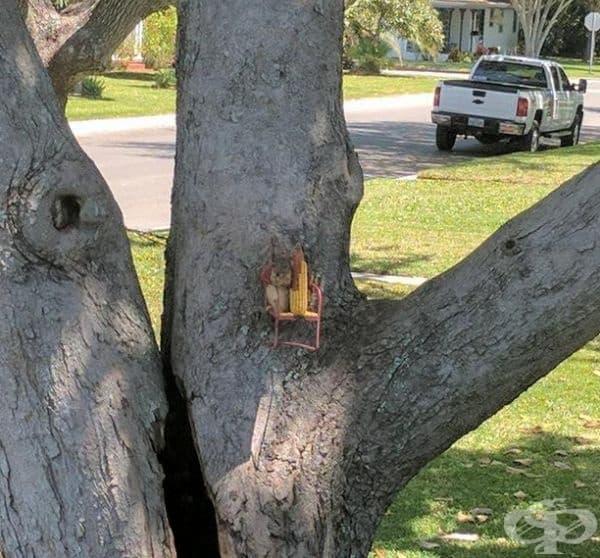 Малка катеричка седи в кресло на дървото и си хапва царевичка.