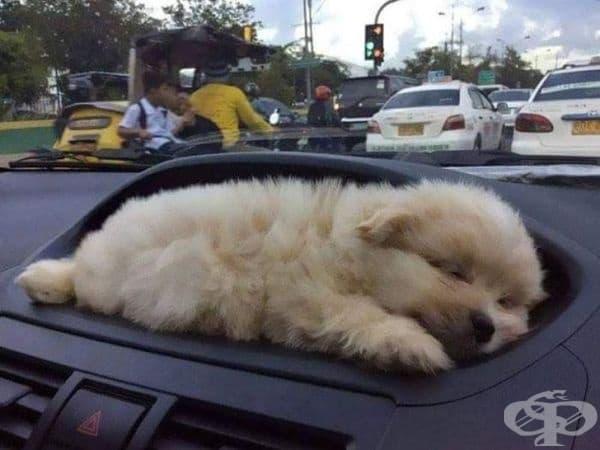 Кола с поставка за кученце